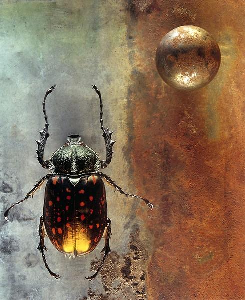 19: Coleoptera
