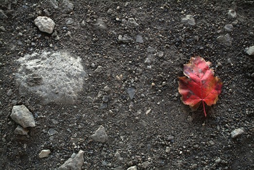 Red Leaf in the Dirt - Stickney, IL
