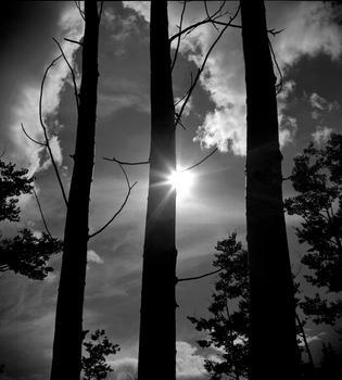 Three Trees - Santa Fe, NM