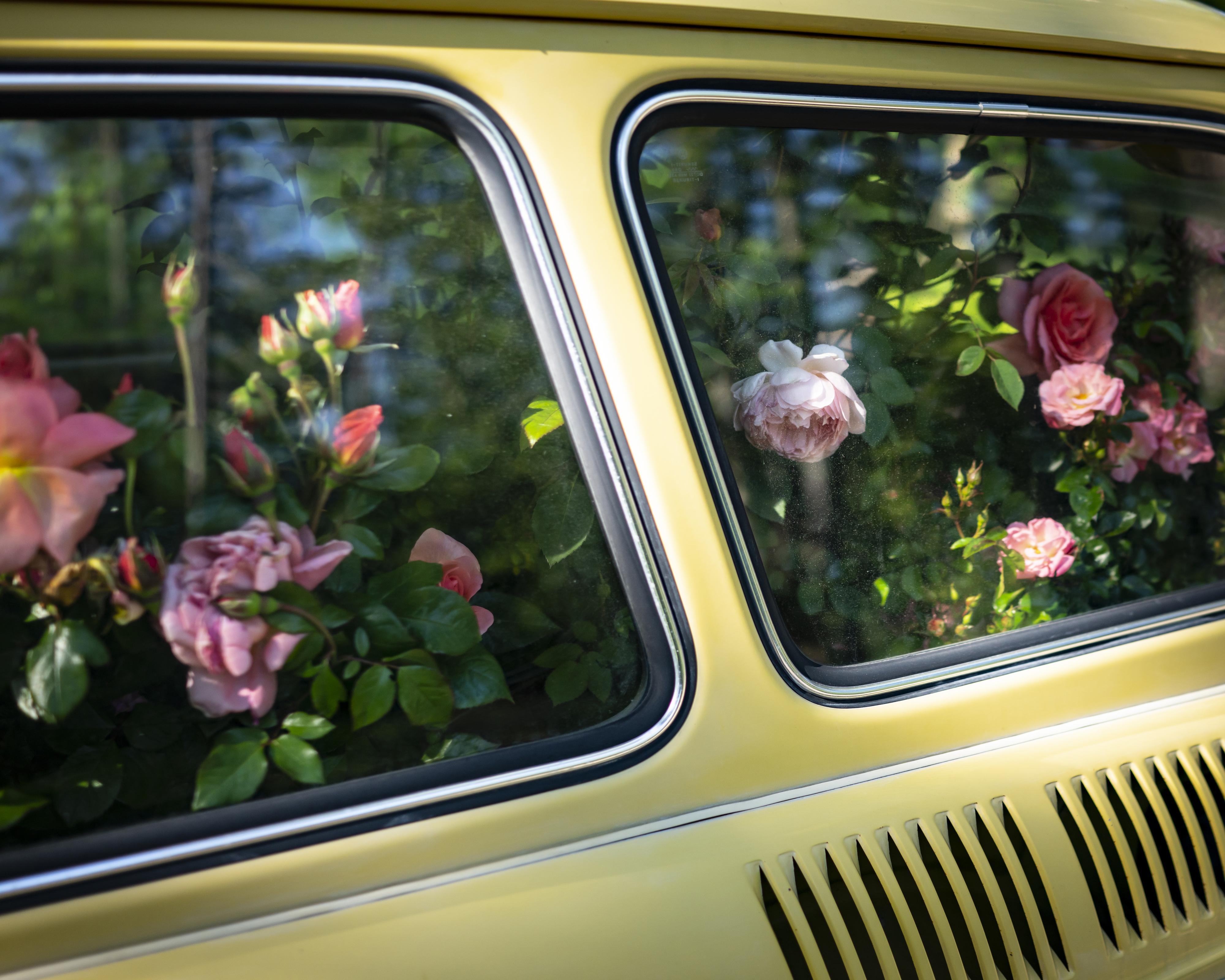 Rixon Reed, Roses, Yellow Car