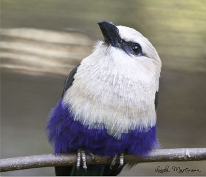 Songbird on a Twig, Atlanta Zoo