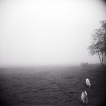 Poetics Of The Landscape XXII