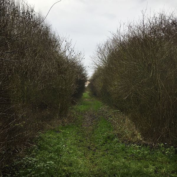 At the Edge of the Fens No 61