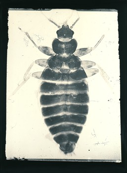 Entomological #2  1870/1987
