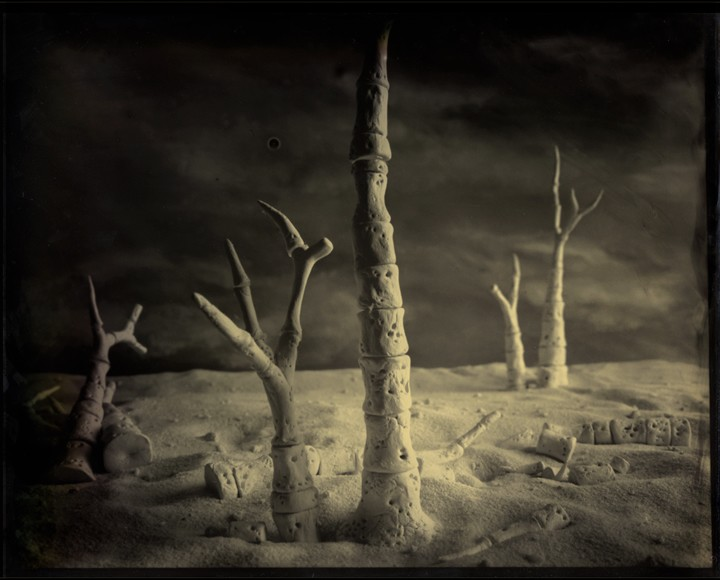 Fossilized Forest, Plate 2