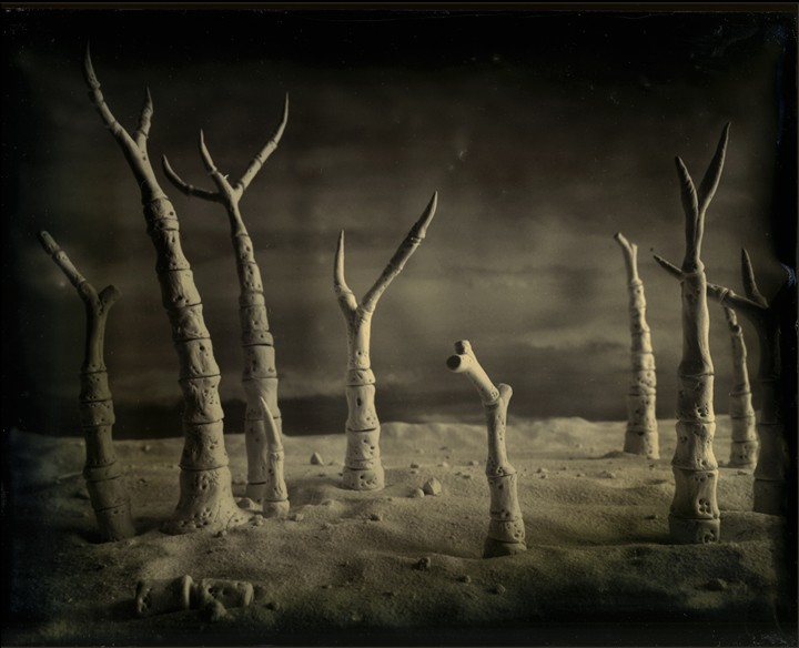 Fossilized Forest, Plate 4