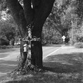 58th & Abercorn Streets, Savannah, GA