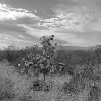 Arizona Hwy 80 near Mile Marker 329