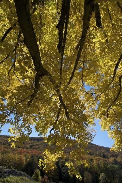 Autumns Reach I