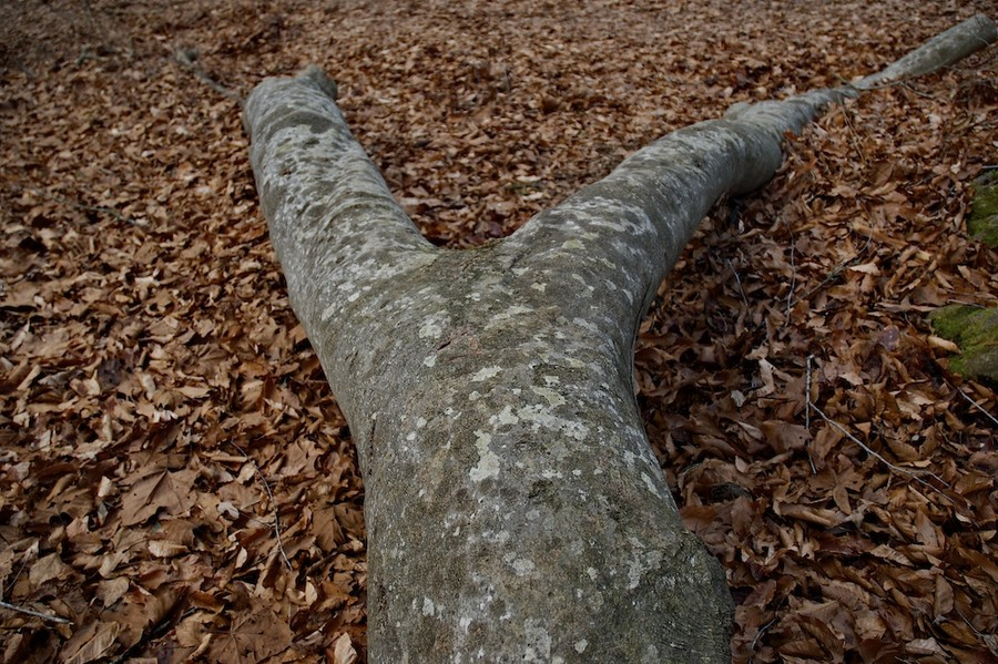 Tree Torso II