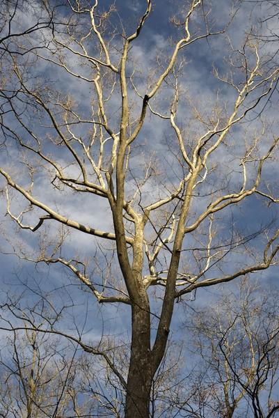 Luminated Branches I