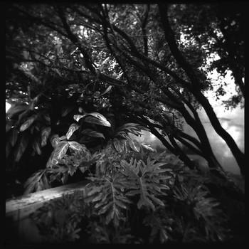 A Garden Landscape