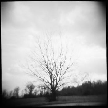 The Haunted Oak