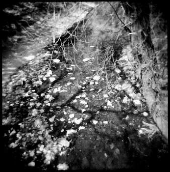 Diamonds on a Dried Creek Bed