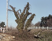 Ruins,2010