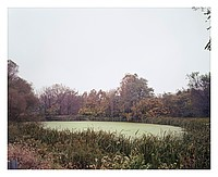Pond with Algee, 2014