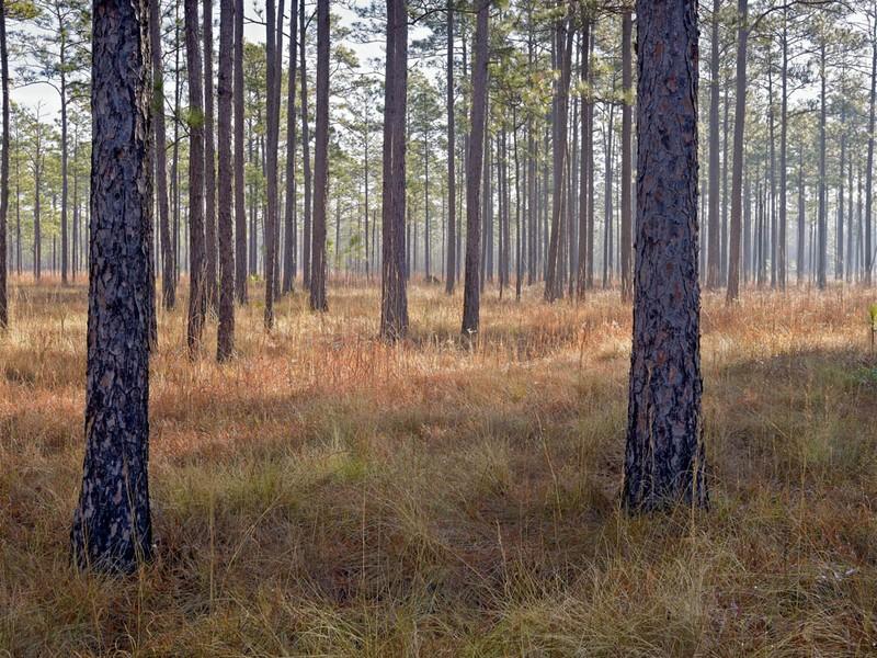 Forest floor, 121010, Jasper County SC