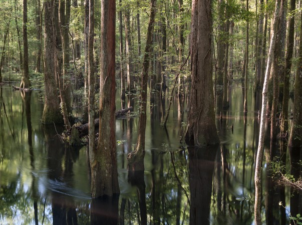 Great Swamp #1, 042413, Jasper County SC