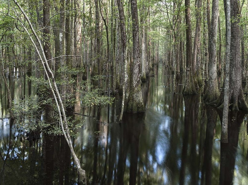 Great Swamp #1, Jasper County, SC 042413