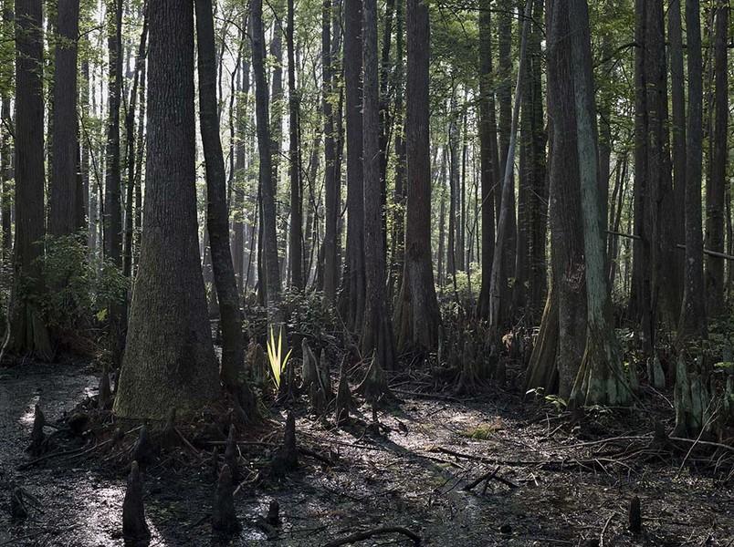 Savannah Wildlife Refuge #7, Jasper County, SC  04