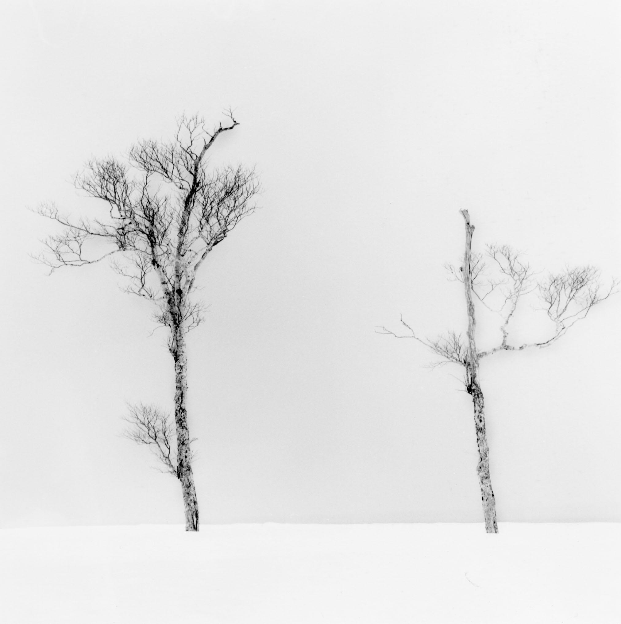 Linda Fitch, Two Trees, Study 5, Lake Kusshard, Hokkaido