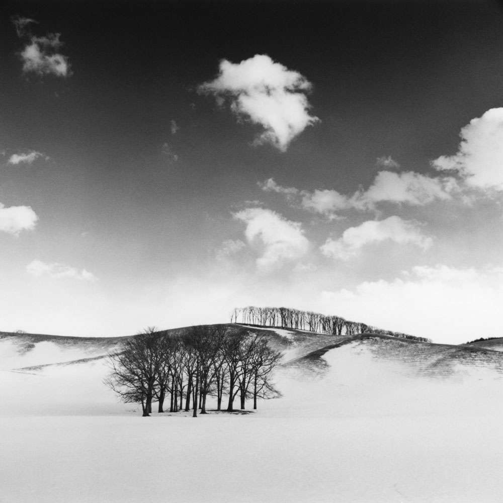 Linda Fitch, HilltopTrees,Study1,Hokkaido,Japan