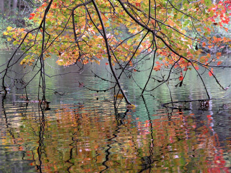 Branches & Reflections—Rhode Island