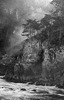 Cypresses & Ocean—Point Lobos