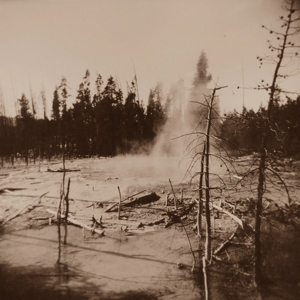 Bare Trees and Steam, Yellowstone National Park