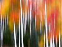 Editioned Color Prints: Landscape