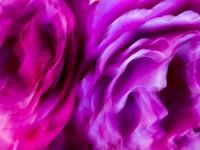 Editioned Color Prints: Botanicals