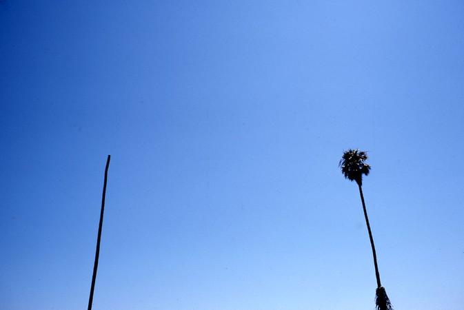 Palms, Santa Barbara