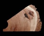 Tree Story: Tree Rings from the LTRR, Arizona