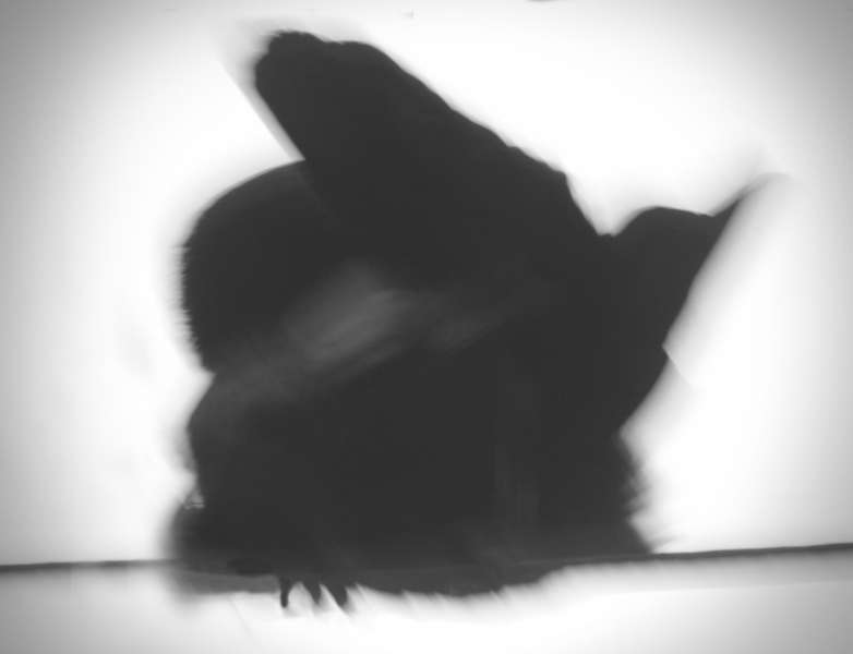 Crow Variations 3