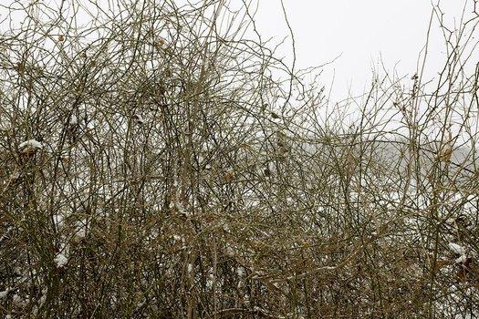 Birds, Winter, Purgatory Cove, Auburndale, MA