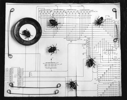 Electric Beetles