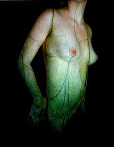 Onion Skin