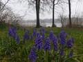 Spring Ephemerals
