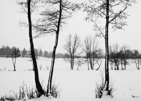 Winter Trees. Essex, England. 1982