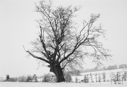 Winter Tree. Essex, England. 1982