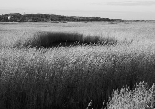Reed Beds Near Cley. Norfolk, England. 2007