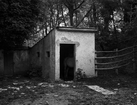 Horse in Stable. Umbria Italy. 2006