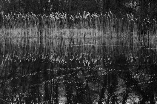 Tree Reflections. Norfolk, England. 2007
