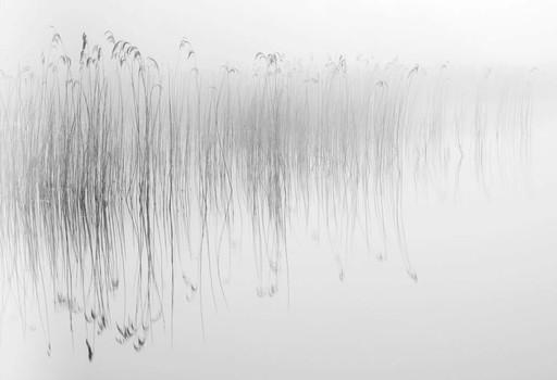 Pond and Reeds 1. Norfolk, England. 2007