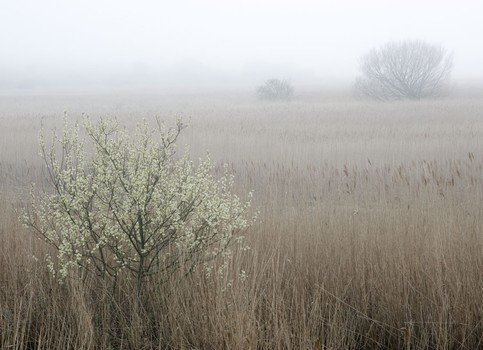 Blossom, Cley Marshes, Norfolk, England. 2007