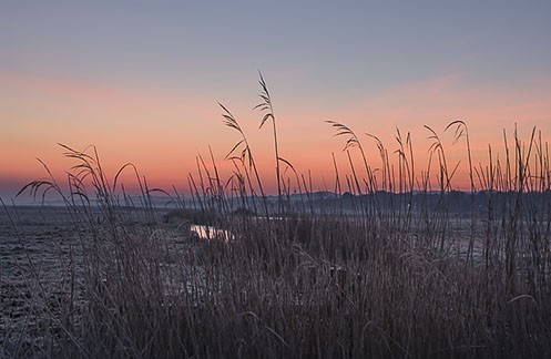 Salthouse marsh, dawn. Norfolk