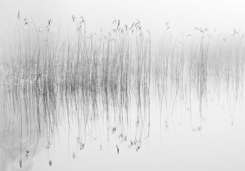 Pond and Reeds 2. Norfolk, England. 2007