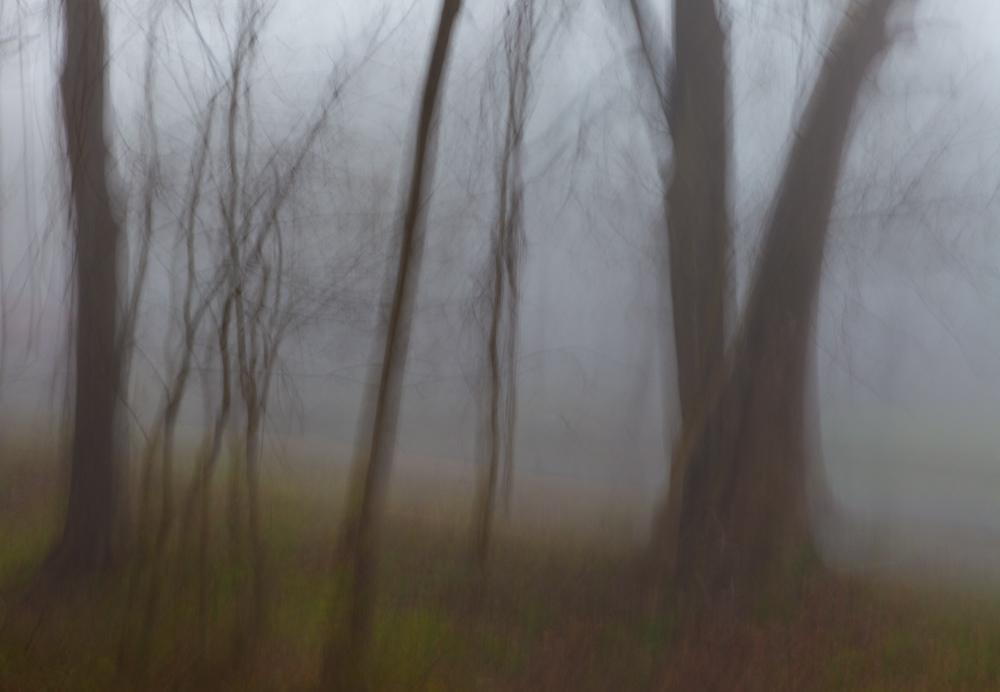 Marsha Wilcox, Veil - trees 1