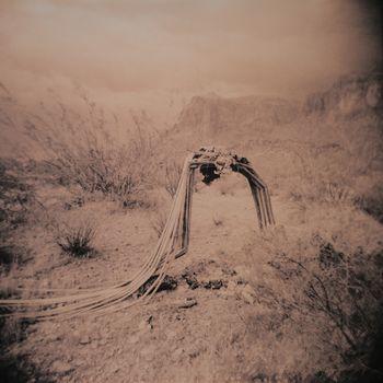 Arizona Lagniappe