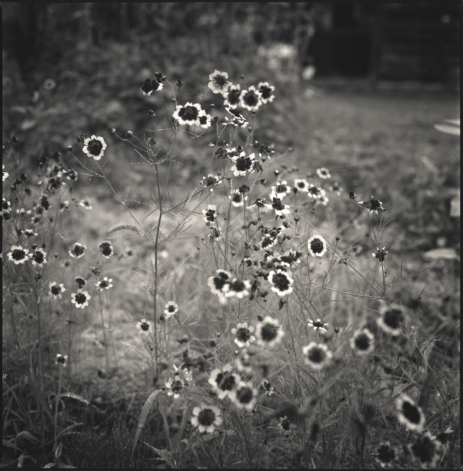 Hiroshi Watanabe, Field Flowers, Kwaidan